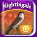 GuruBear HD – The Nightingale